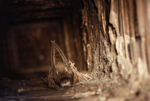 Hniezdo v komíne
